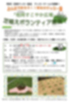 kebioka_shiba.jpg