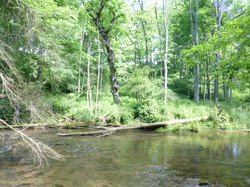 Class A Wild Trout Waters