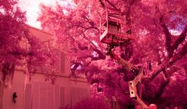 Flora Telegraph, lift in tree