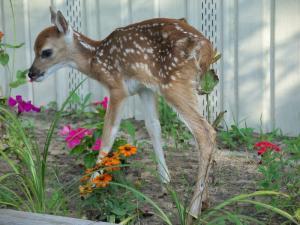 Deer Resistant Landscaping