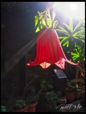 Rose of La Gomera.jpg