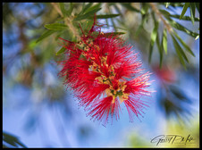 Blume.jpg