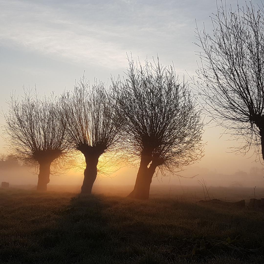 Hof-van-Vijfeijken-goedemorgen