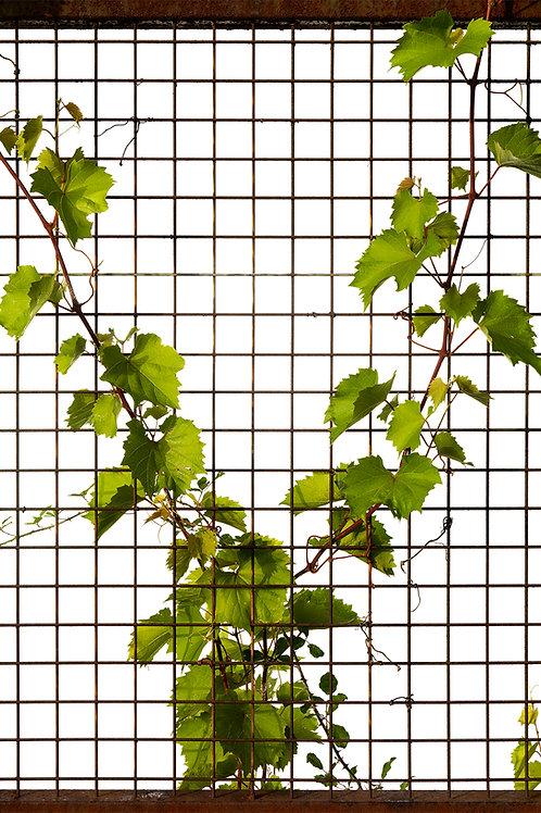 Flora_Wein