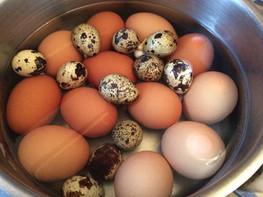 Hof-van-Vijfeijken-eieren