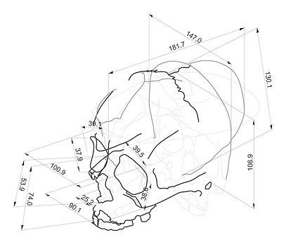 Skull model for Meresankh III
