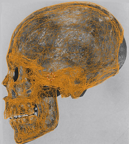 KV 55 digital model of the skull  (C) Ci