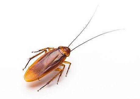 cockroach-new_edited.jpg