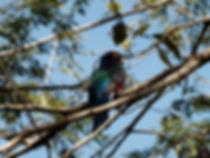 consultoria ambiental londrina, meio ambiente londrina, monitoramento ambiental londrina, fauna animais aves londrina