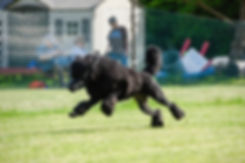 thumbnail_jrwi-3-jun9_black_poodle-2.jpg