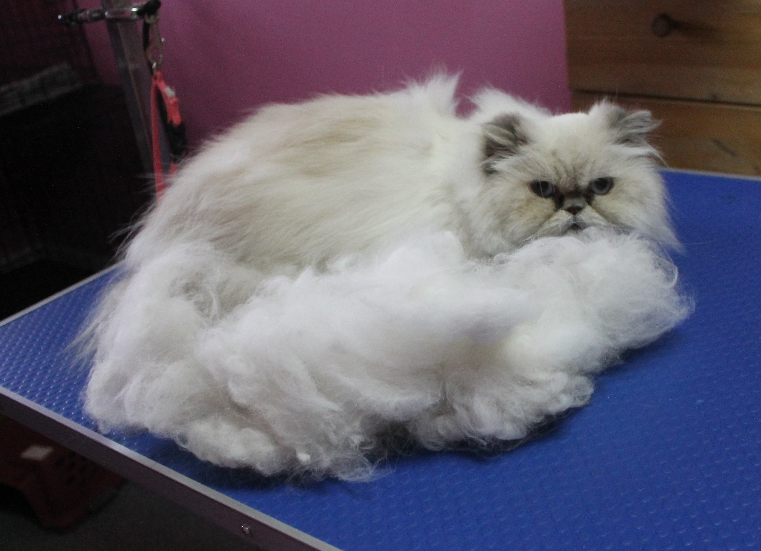 rockycat