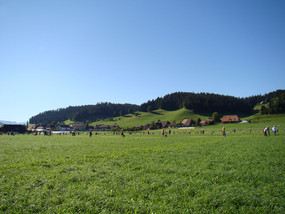 Feste 2011