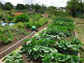 south croydon allotment, Croydon allotment