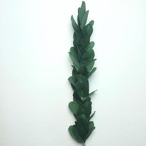 Short Leaf Myrtle