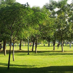 Ζήτηση προσφορών για ένα κοινοτικό πάρκο