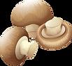 Mushrooms_edited.png