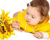 baby looking at Sunflower