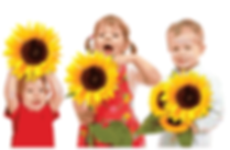 Three kids holding Sunflowers