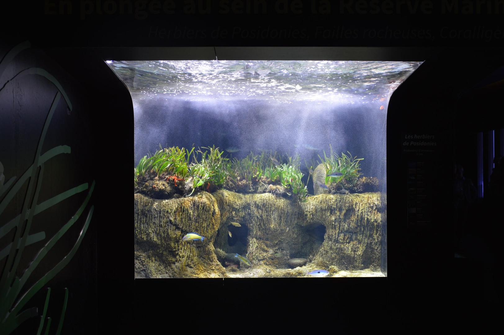 Banyuls aquarium