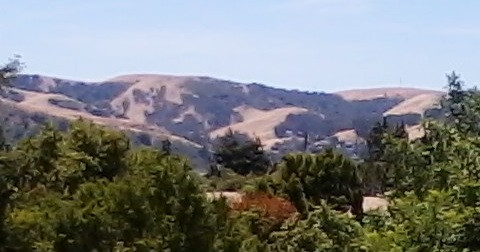 the brown hills