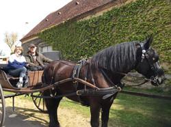 14- Balade en charrette anglaise