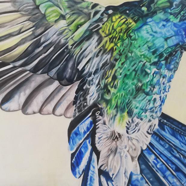 'Hummingbird in Flight', oil painting on paper
