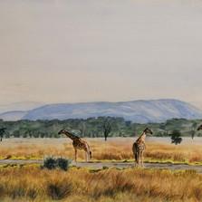 Safari scene commission, watercolour on A4 paper