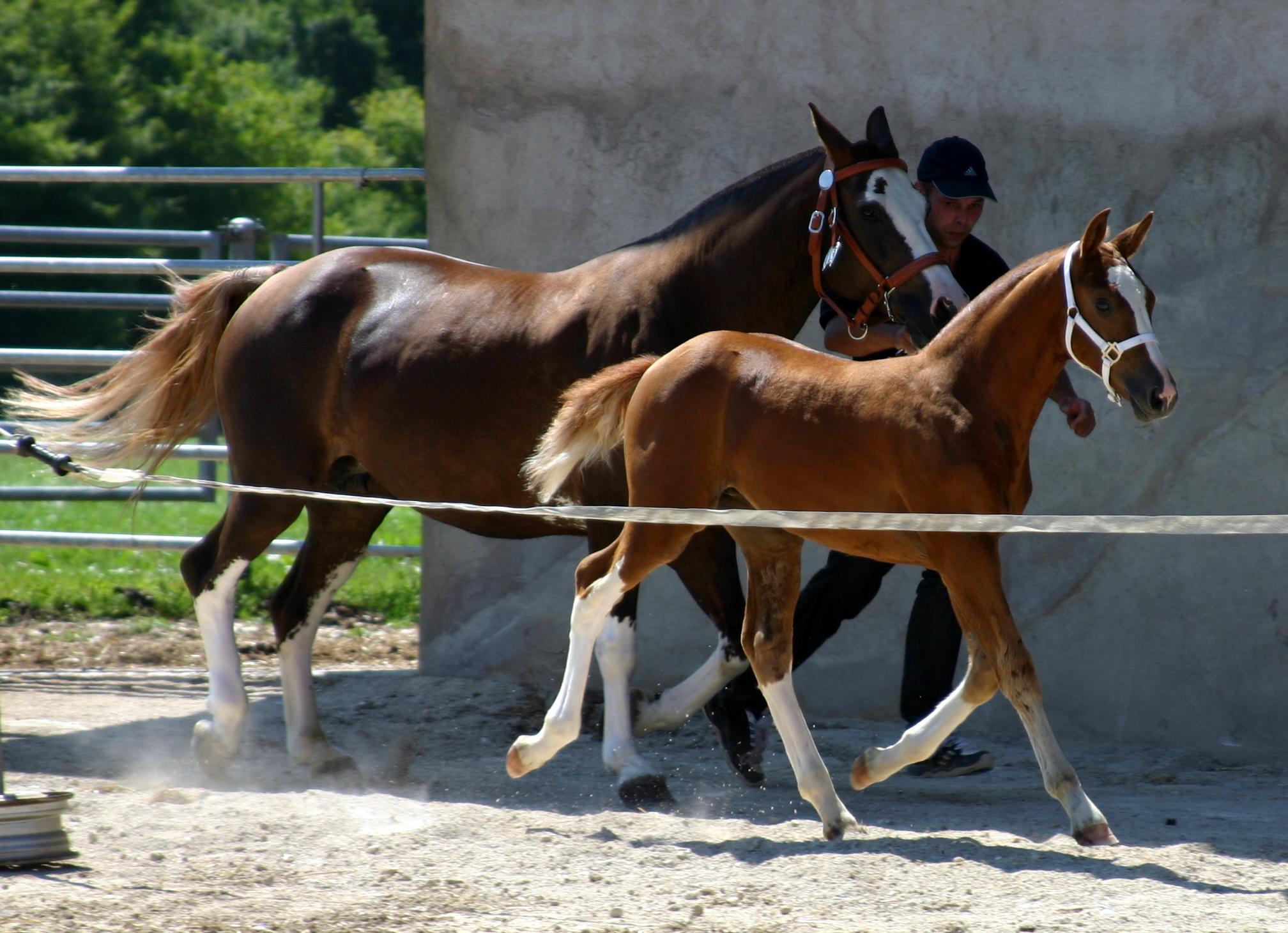 concours poulains 2005 072.jpg