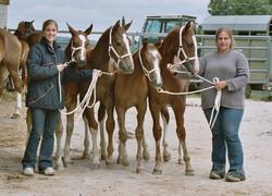 Poulains franches-montagnes 2004
