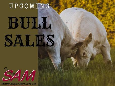 Upcoming Bull Sales