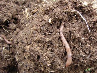 Benefits of the Minimum Till Garden with Rod Daniel | Saturday, April 14th. 10AM