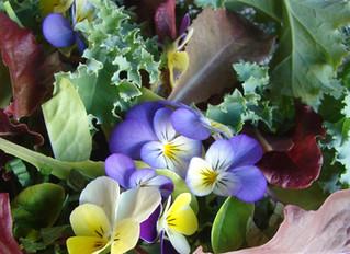 In the Garden: Fast Growing Vegetables