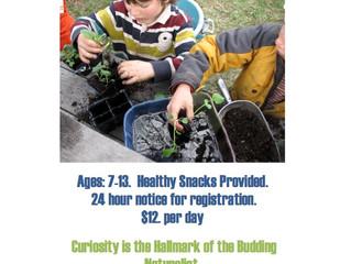 Curiosity Camps Summer 2016