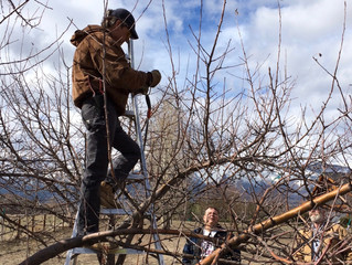 Andy Roubik | Pruning Workshop