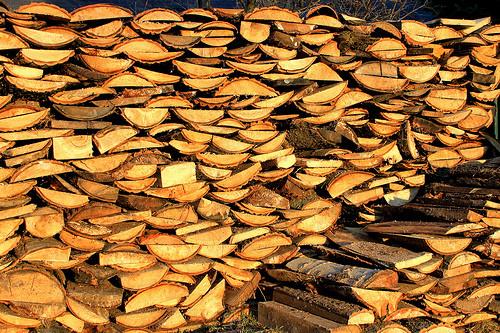 Slab Lumber