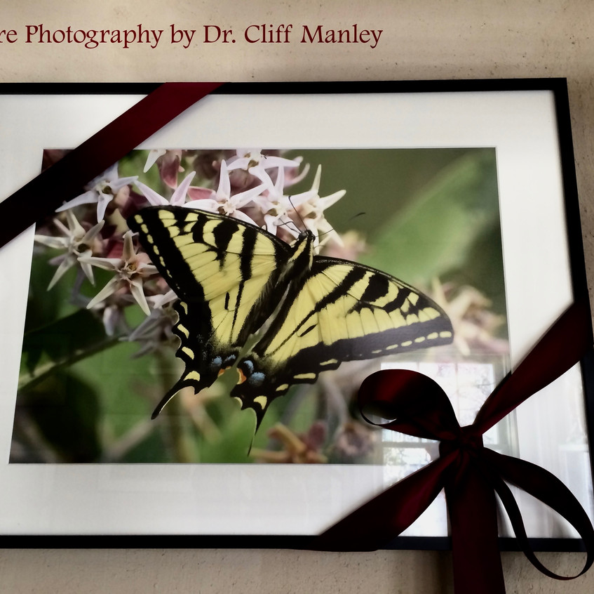 Dr Cliff Manley. Nature Photography