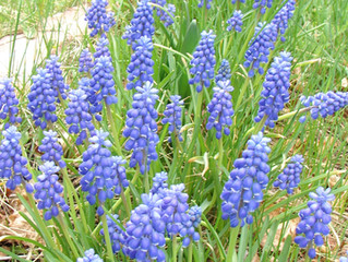 April: Vegetable Planting Schedule