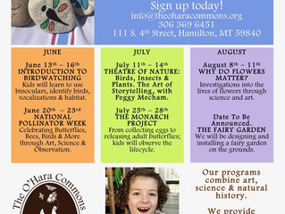 Curiosity Camps | Summer Sessions