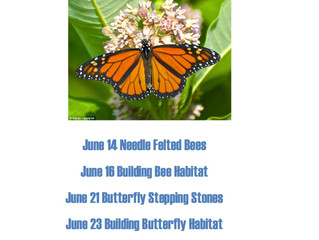 June Curiosity Camps Schedule