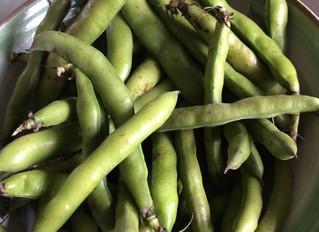 Fava Bean, Mint & Prosciutto Salad