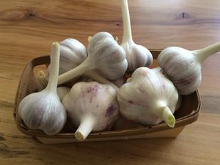 A Garlic Compendium