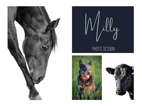 Pet Portrait - Milly
