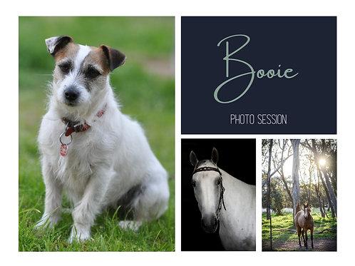 Pet Portrait - Booie