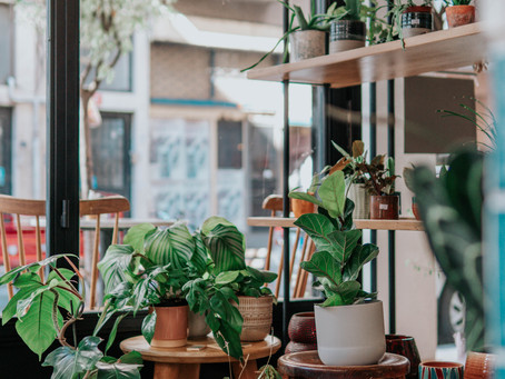 An Urban Jungle - The Importance of House Plants