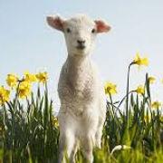 Farmers tax return advice Deans