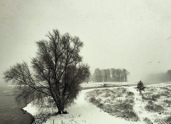 Beequeen  I  Winter LP