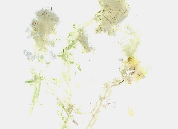 """Neil Campbell  I  Perimeter Ghost Bloom 10"""" lathe/cdr"""