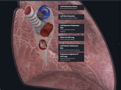 online anatomy and physiology