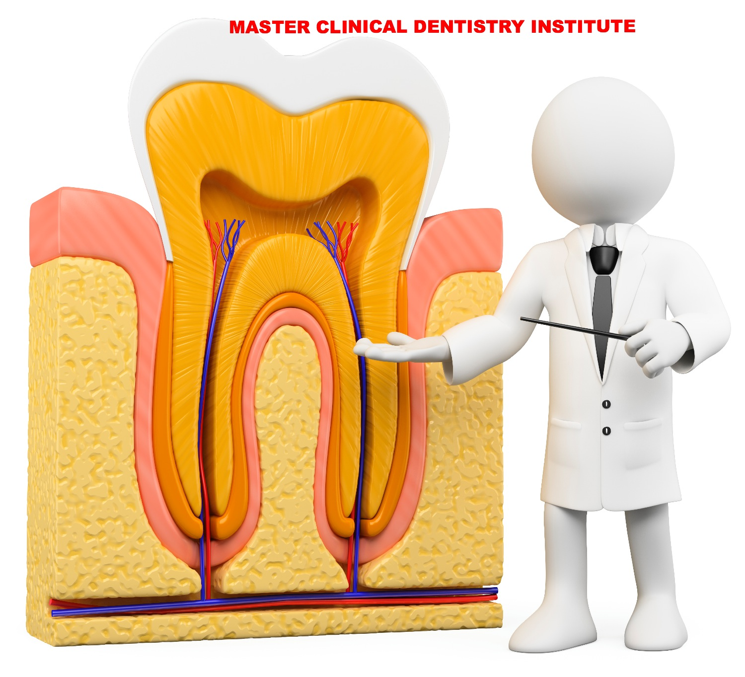 Root canal courses