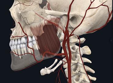 advanced anatomy course